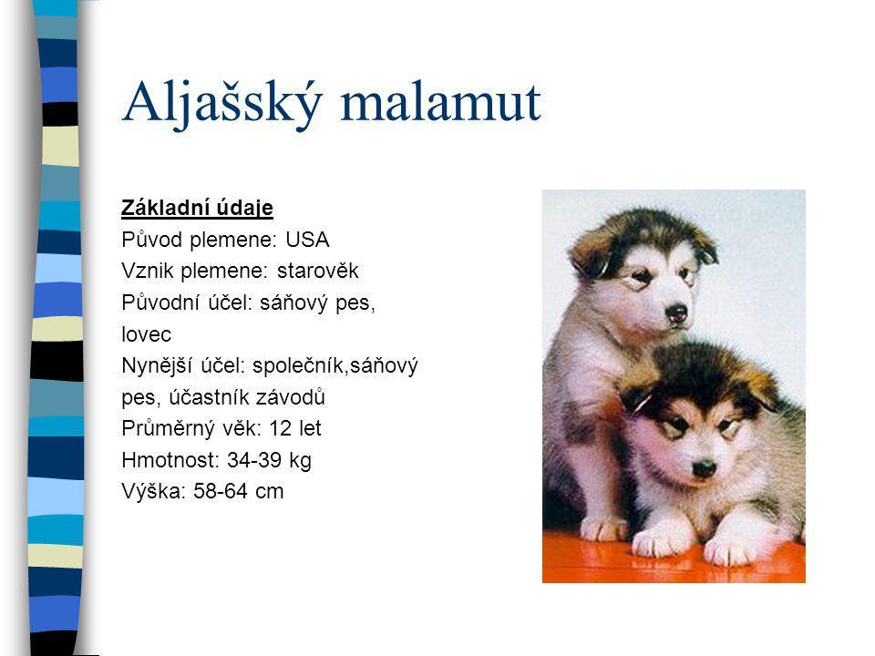 Aljašský malamut Základní údaje Původ plemene: USA