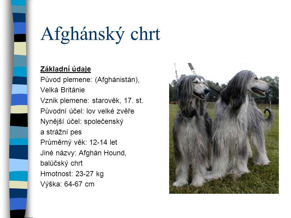 Afghánský chrt Základní údaje Původ plemene: (Afghánistán),