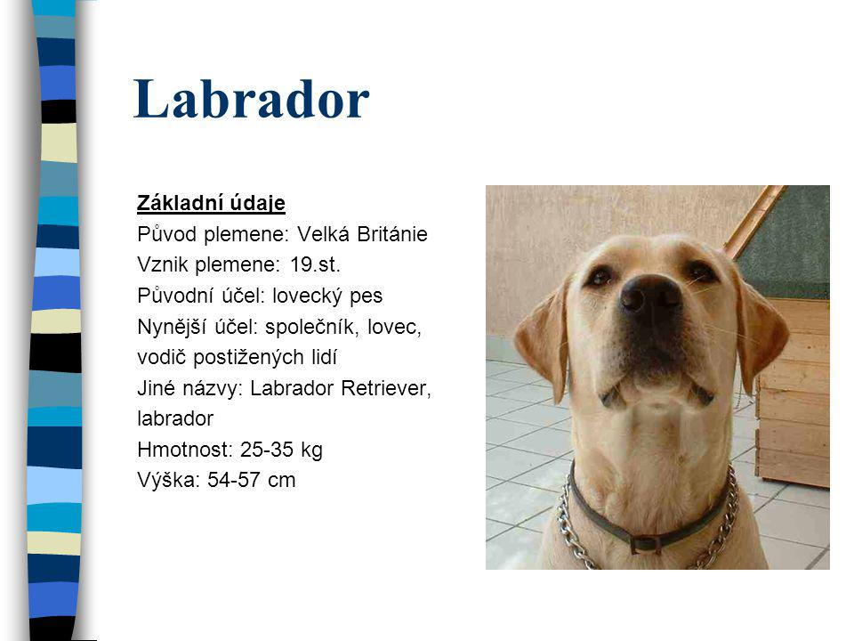 Labrador Základní údaje Původ plemene: Velká Británie