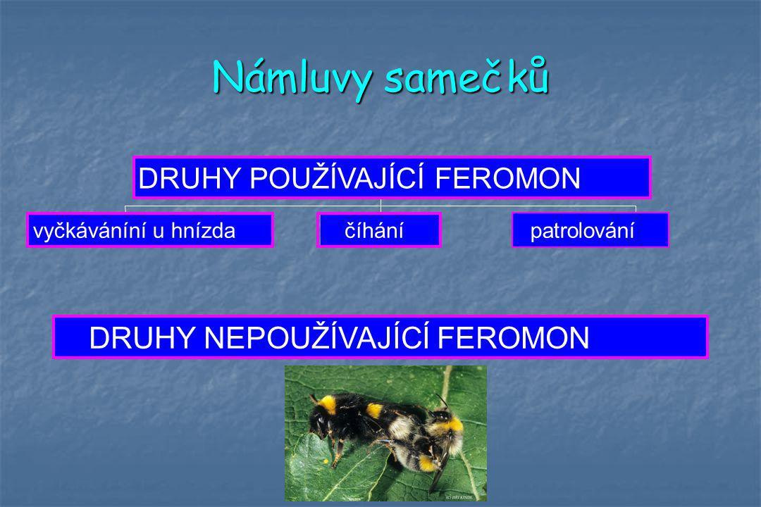 Námluvy samečků DRUHY NEPOUŽÍVAJÍCÍ FEROMON DRUHY POUŽÍVAJÍCÍ FEROMON