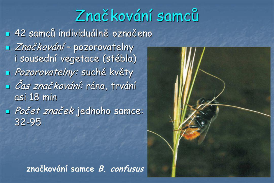 Značkování samců 42 samců individuálně označeno