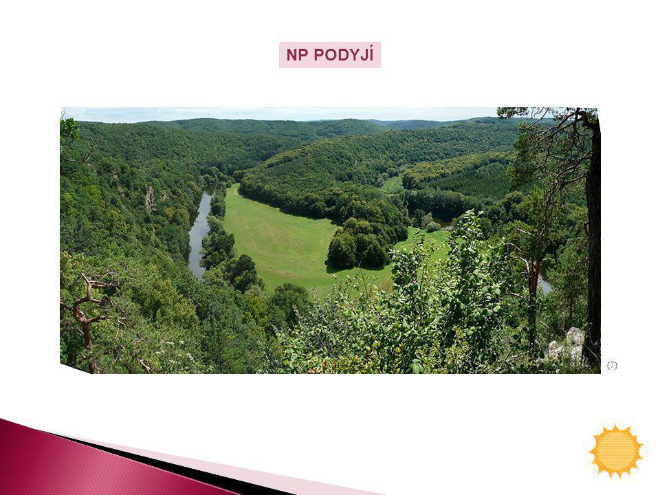 NP PODYJÍ (7)