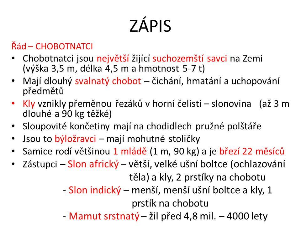 ZÁPIS těla) a kly, 2 prstíky na chobotu
