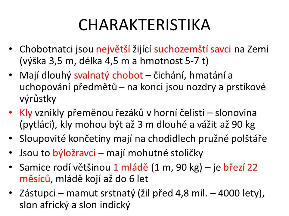 CHARAKTERISTIKA Chobotnatci jsou největší žijící suchozemští savci na Zemi (výška 3,5 m, délka 4,5 m a hmotnost 5-7 t)