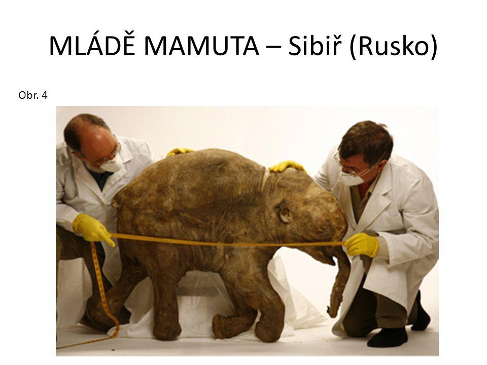 MLÁDĚ MAMUTA – Sibiř (Rusko)
