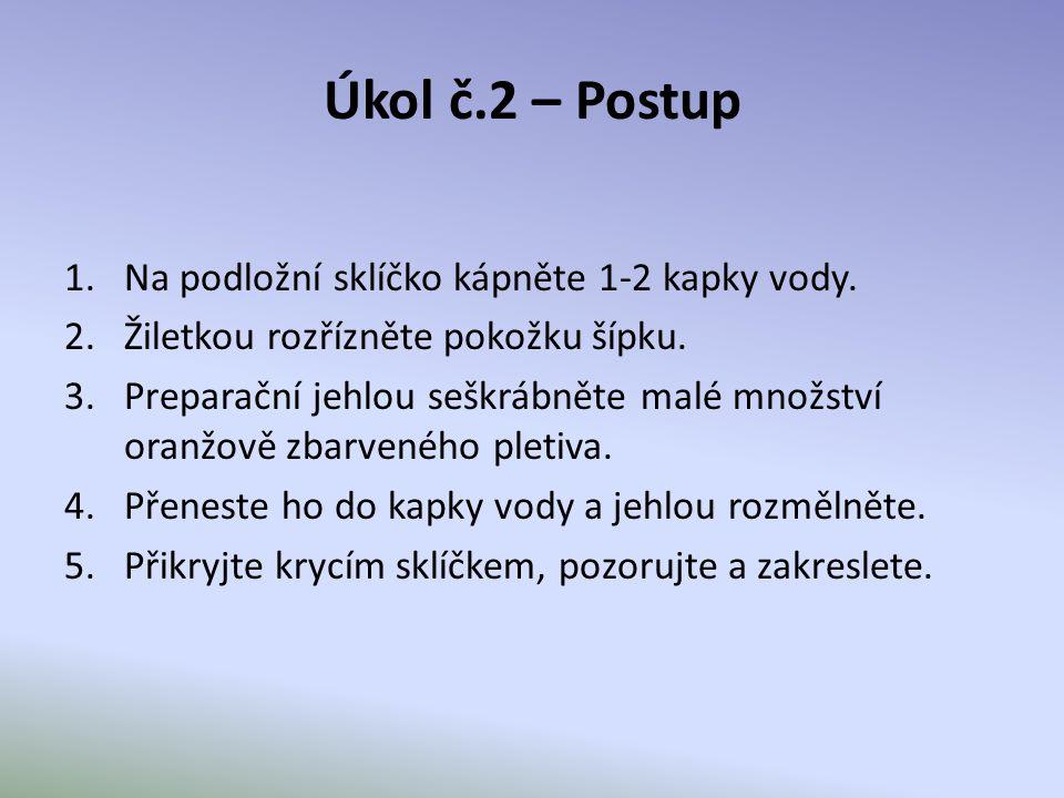 Úkol č.2 – Postup Na podložní sklíčko kápněte 1-2 kapky vody.