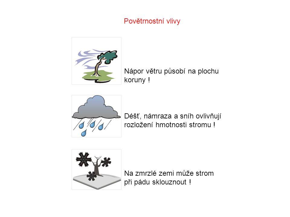 Povětrnostní vlivy Nápor větru působí na plochu koruny ! Déšť, námraza a sníh ovlivňují rozložení hmotnosti stromu !