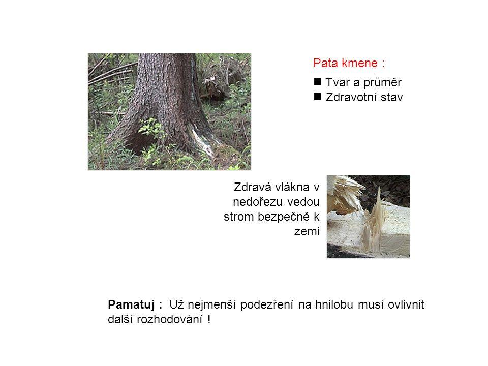 Pata kmene : Tvar a průměr. Zdravotní stav. Zdravá vlákna v nedořezu vedou strom bezpečně k zemi.