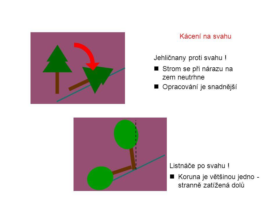 Kácení na svahu Jehličnany proti svahu ! Strom se při nárazu na zem neutrhne. Opracování je snadnější.