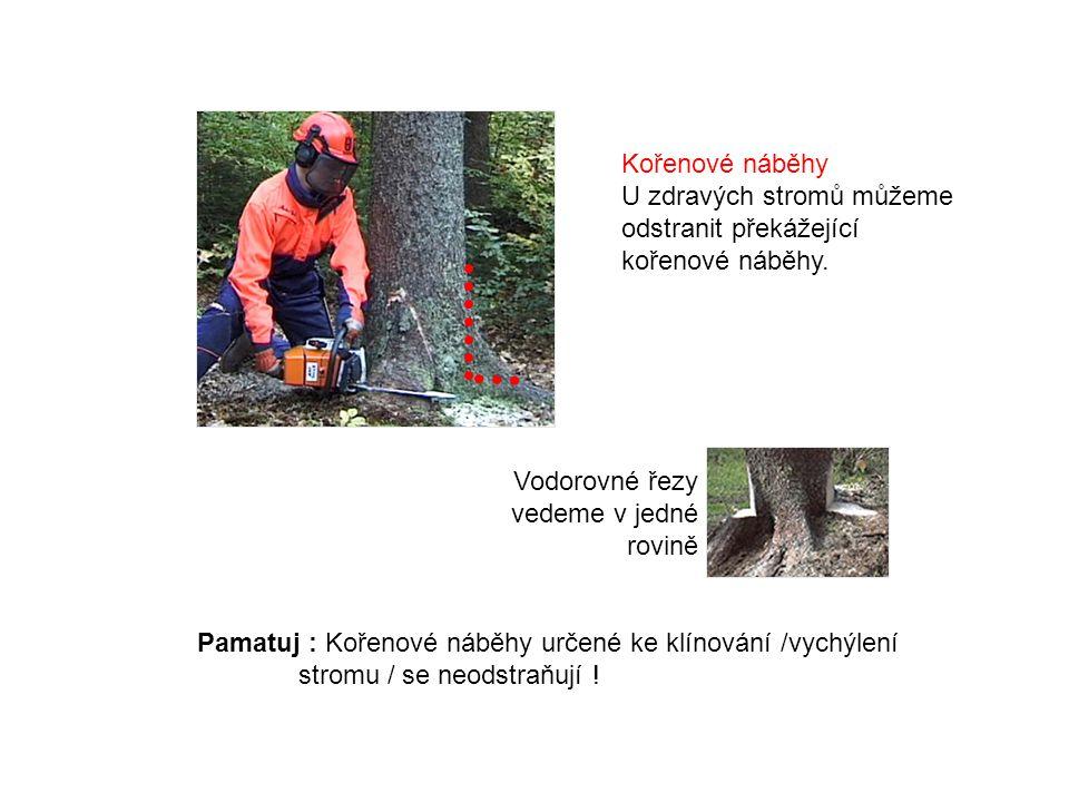 Kořenové náběhy U zdravých stromů můžeme odstranit překážející kořenové náběhy. Vodorovné řezy vedeme v jedné rovině.