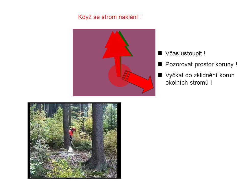 Když se strom naklání : Včas ustoupit . Pozorovat prostor koruny .