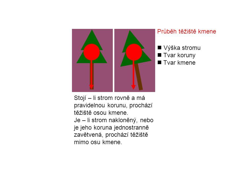 Průběh těžiště kmene Výška stromu. Tvar koruny. Tvar kmene.