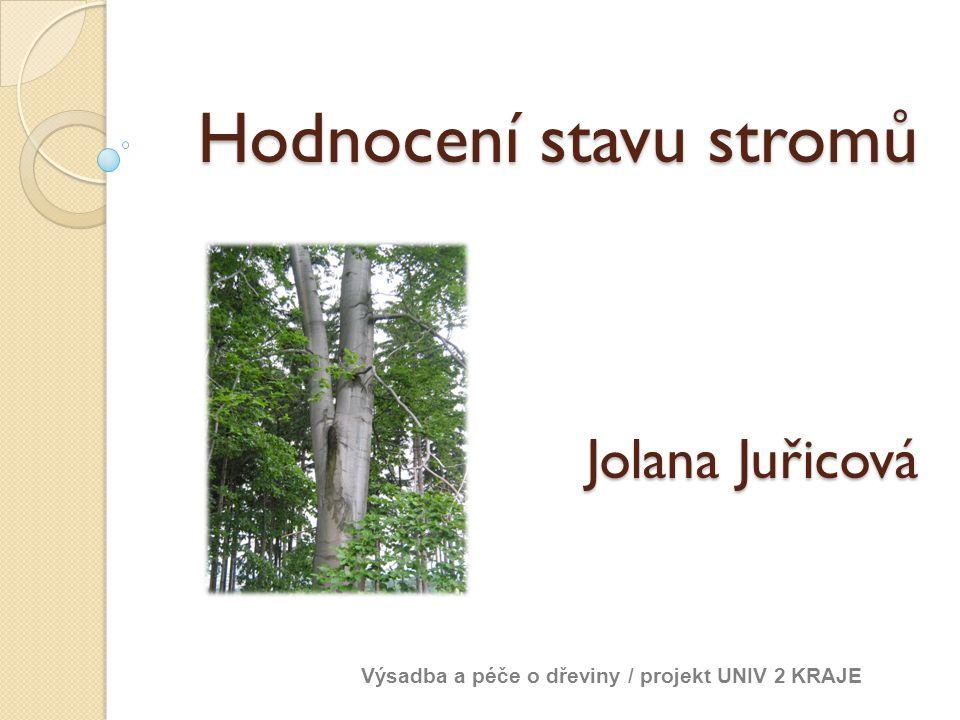 Hodnocení stavu stromů Jolana Juřicová