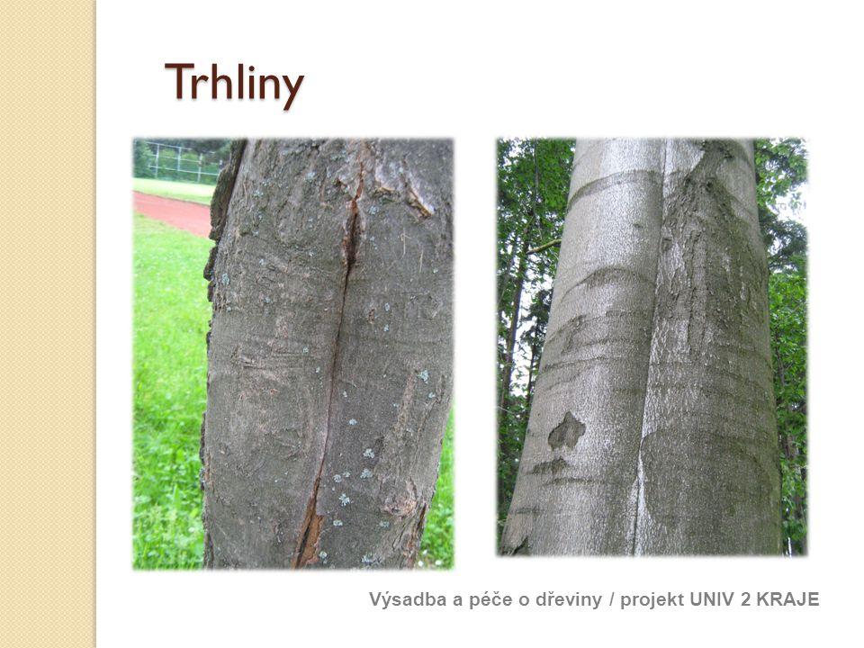 Trhliny Výsadba a péče o dřeviny / projekt UNIV 2 KRAJE