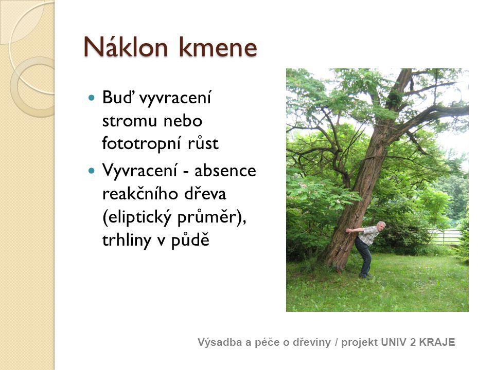 Náklon kmene Buď vyvracení stromu nebo fototropní růst