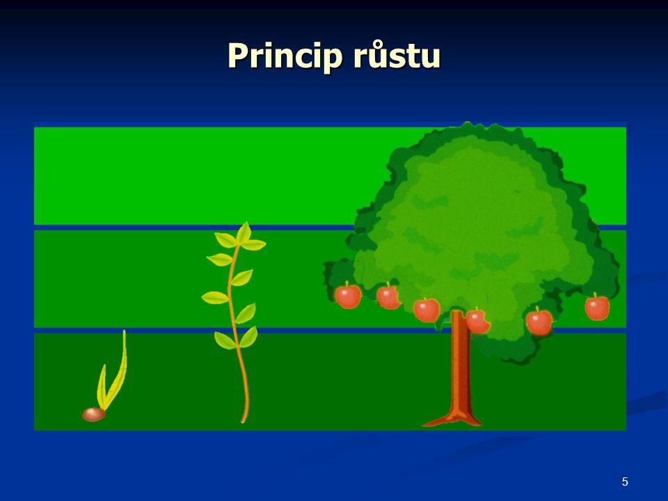 Princip růstu