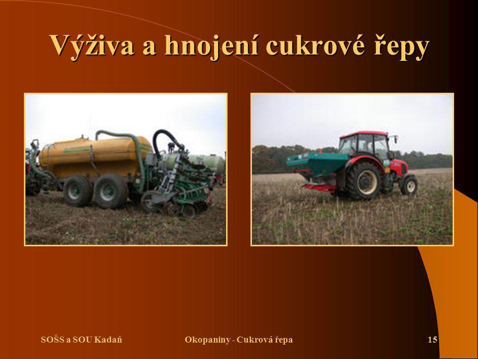 Výživa a hnojení cukrové řepy