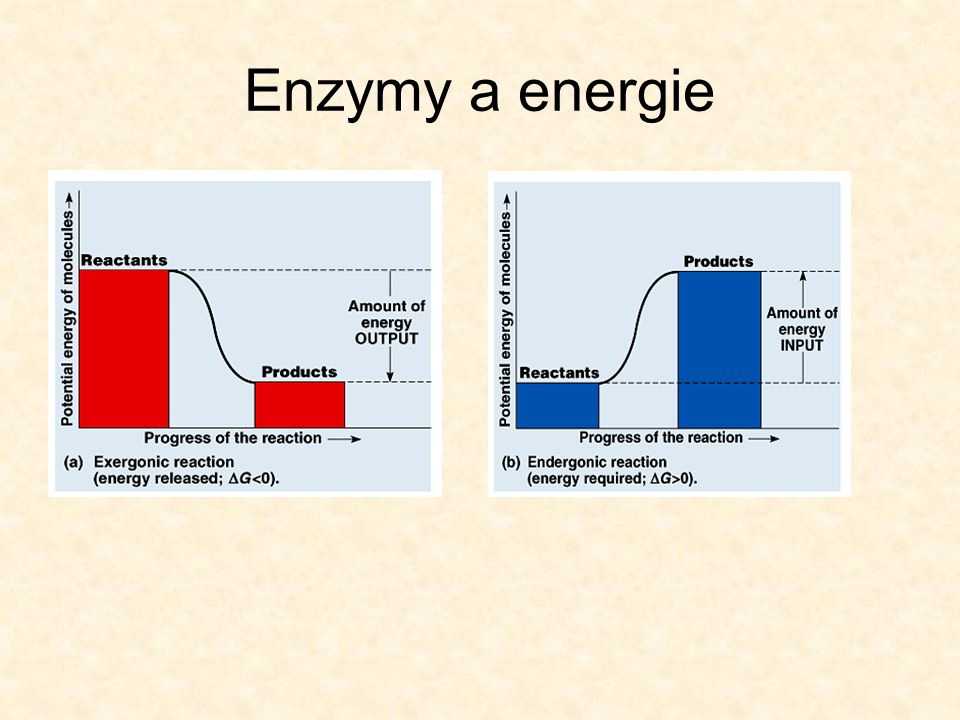 Enzymy a energie