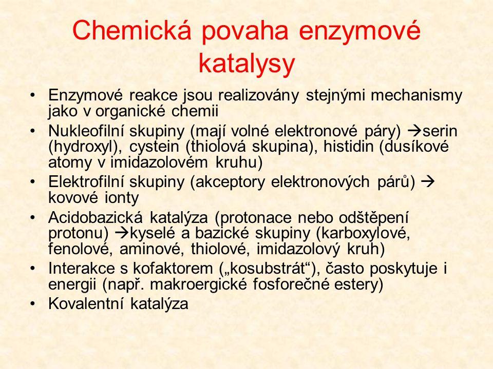 Chemická povaha enzymové katalysy