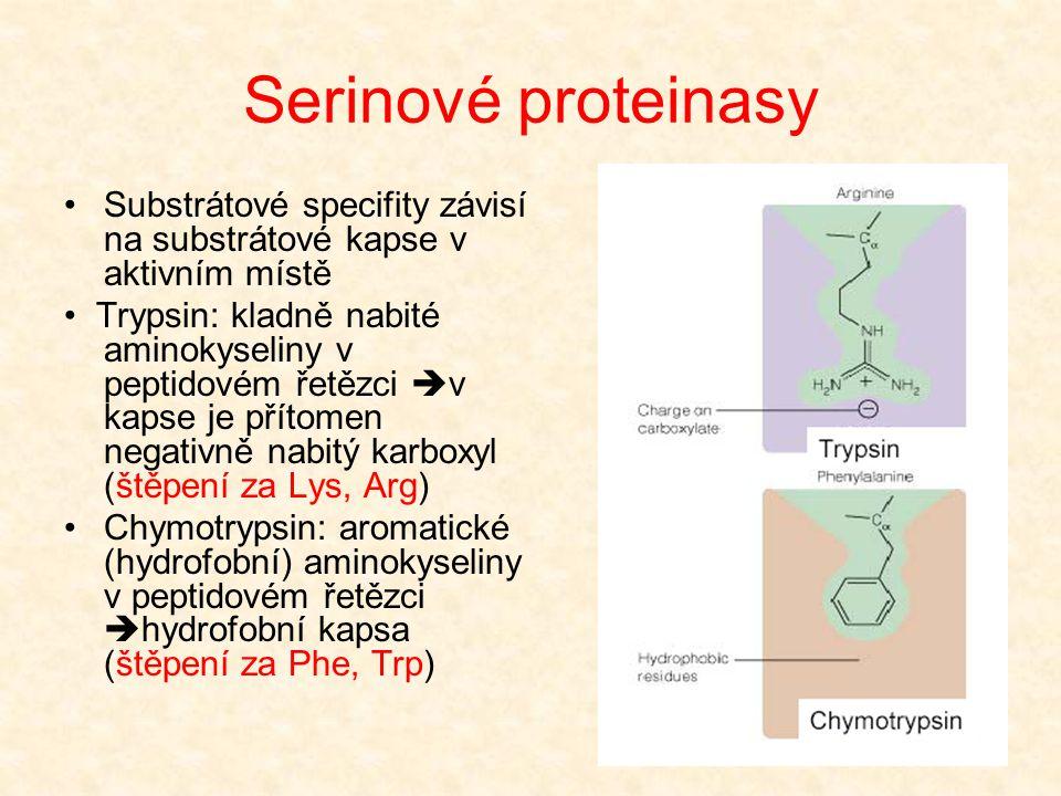 Serinové proteinasy Substrátové specifity závisí na substrátové kapse v aktivním místě.