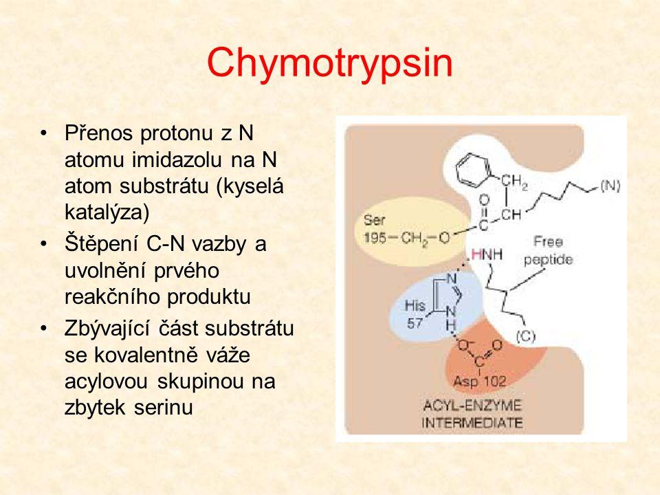 Chymotrypsin Přenos protonu z N atomu imidazolu na N atom substrátu (kyselá katalýza) Štěpení C-N vazby a uvolnění prvého reakčního produktu.
