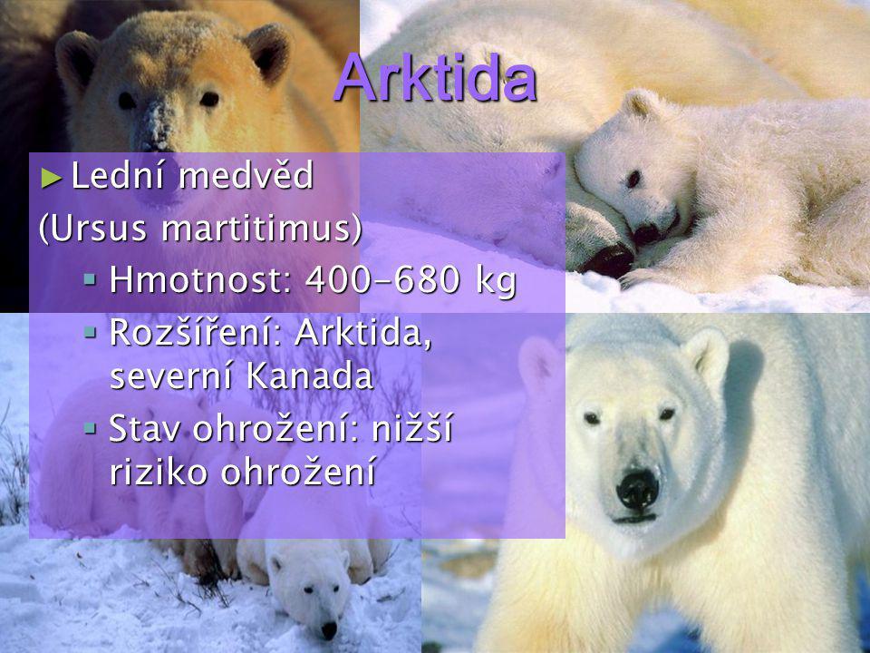 Arktida Lední medvěd (Ursus martitimus) Hmotnost: 400-680 kg