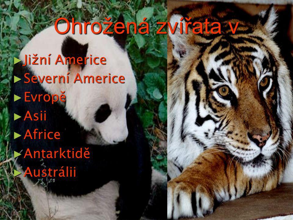 Ohrožená zvířata v Jižní Americe Severní Americe Evropě Asii Africe