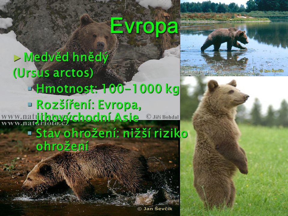 Evropa Medvěd hnědý (Ursus arctos) Hmotnost: 100-1000 kg