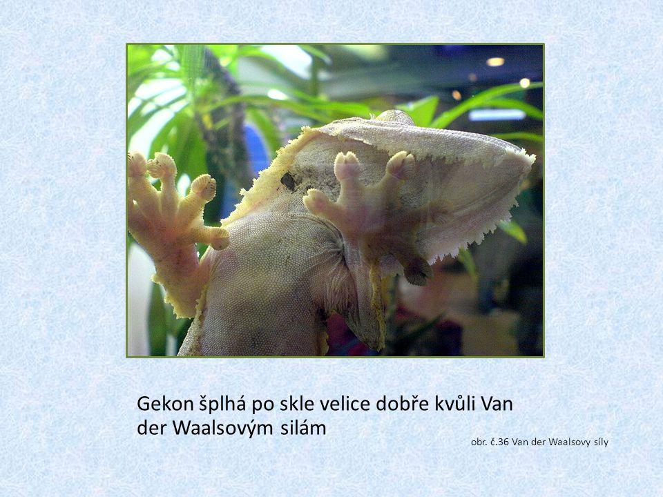Gekon šplhá po skle velice dobře kvůli Van der Waalsovým silám