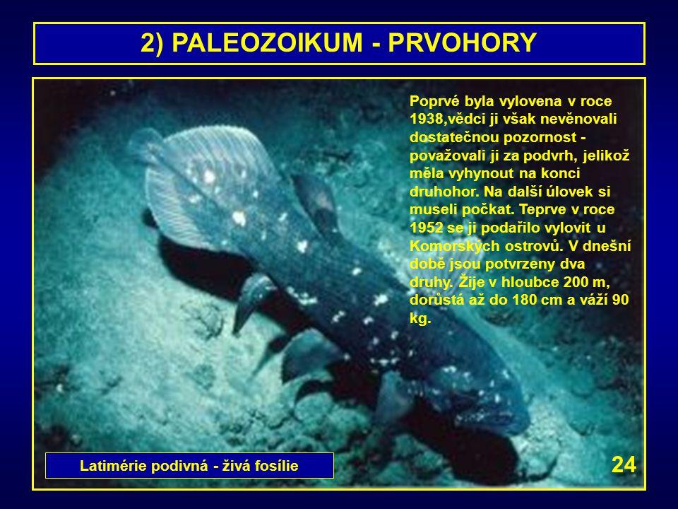 2) PALEOZOIKUM - PRVOHORY Latimérie podivná - živá fosílie
