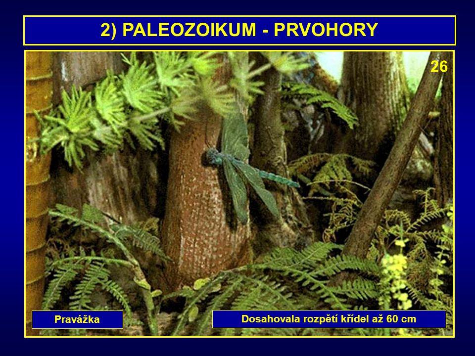 2) PALEOZOIKUM - PRVOHORY Dosahovala rozpětí křídel až 60 cm