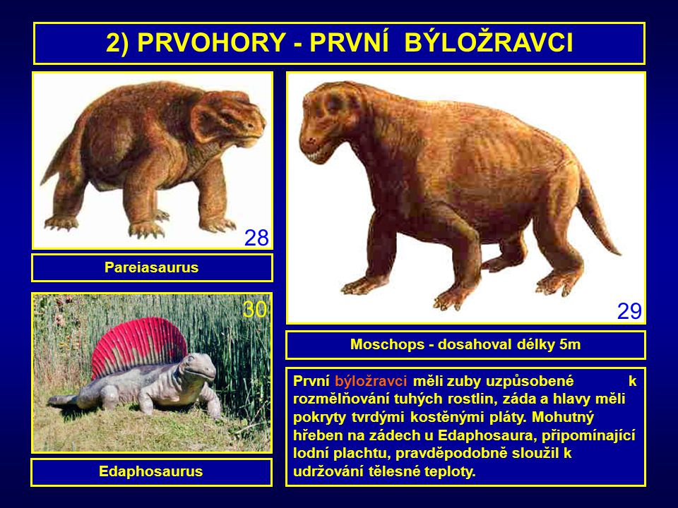2) PRVOHORY - PRVNÍ BÝLOŽRAVCI Moschops - dosahoval délky 5m