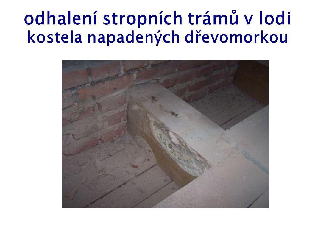 odhalení stropních trámů v lodi kostela napadených dřevomorkou