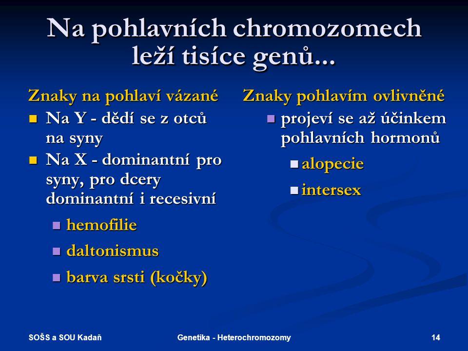 Na pohlavních chromozomech leží tisíce genů...