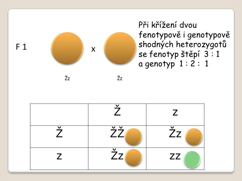 Při křížení dvou fenotypově i genotypově shodných heterozygotů