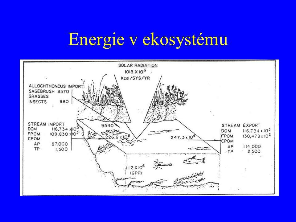 Energie v ekosystému