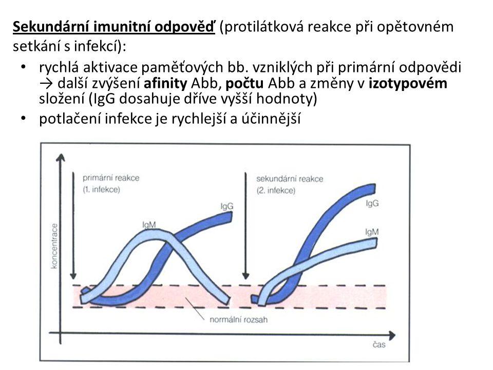 Sekundární imunitní odpověď (protilátková reakce při opětovném setkání s infekcí):