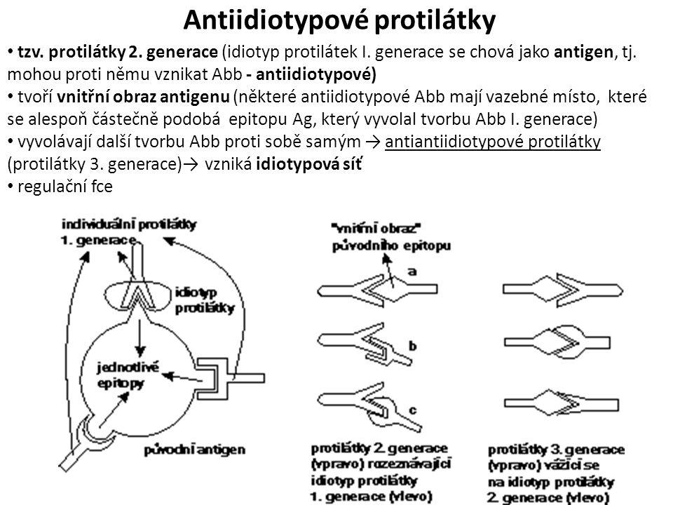 Antiidiotypové protilátky