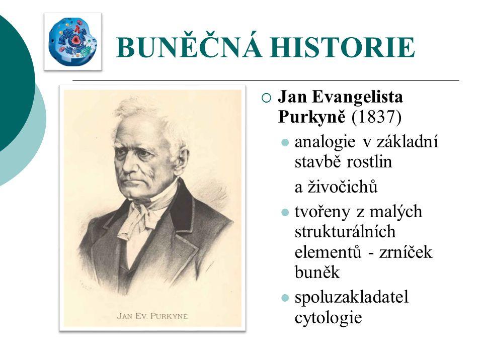 BUNĚČNÁ HISTORIE Jan Evangelista Purkyně (1837)