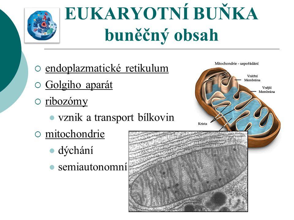 EUKARYOTNÍ BUŇKA buněčný obsah
