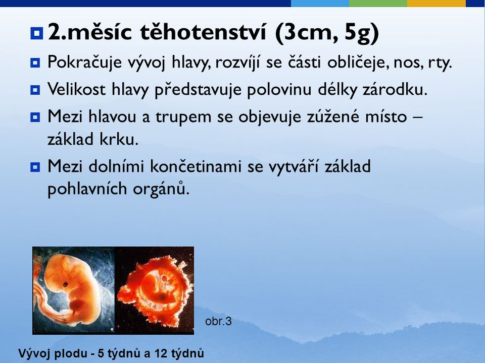 2.měsíc těhotenství (3cm, 5g)