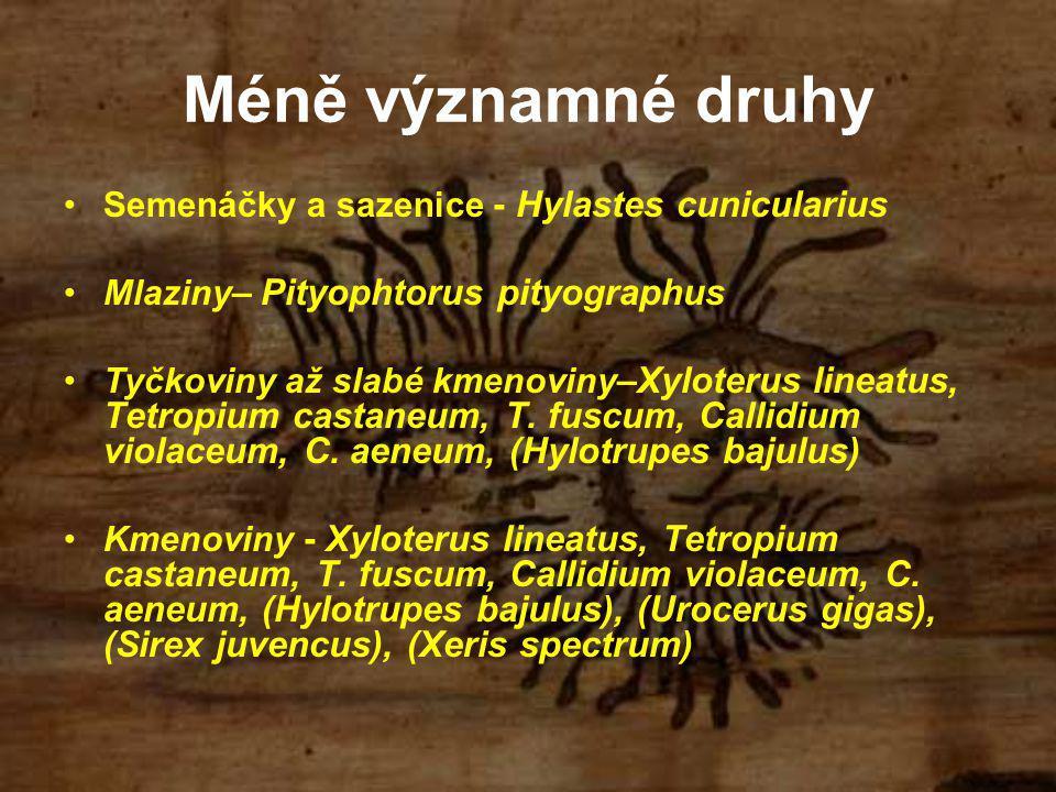 Méně významné druhy Semenáčky a sazenice - Hylastes cunicularius