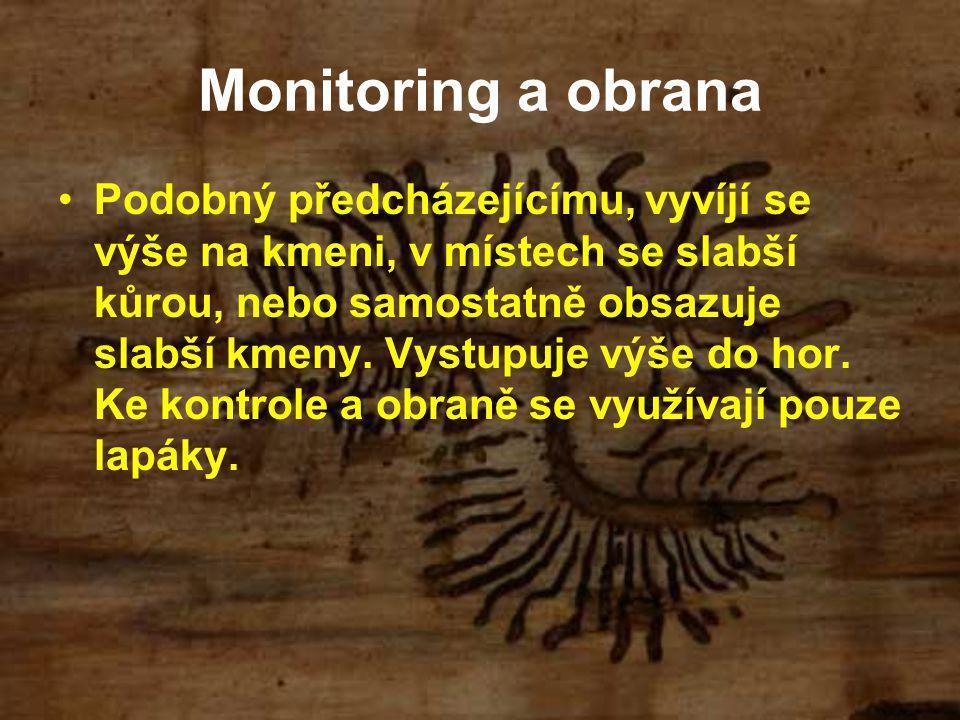 Monitoring a obrana