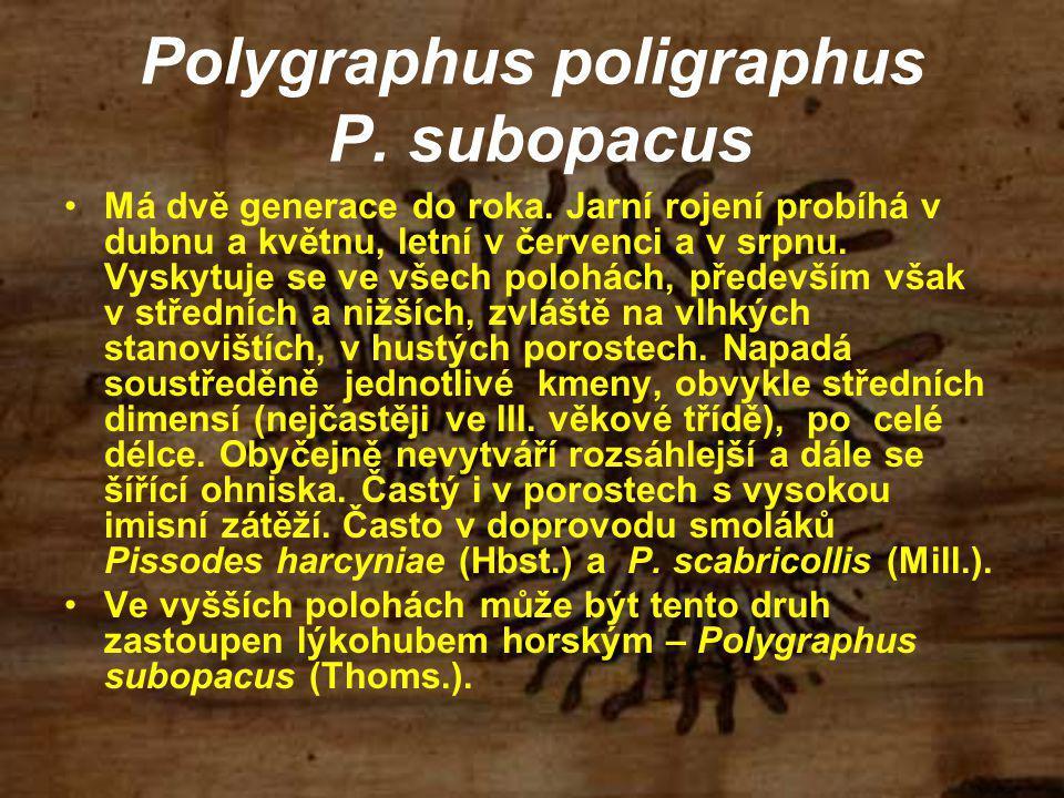 Polygraphus poligraphus P. subopacus