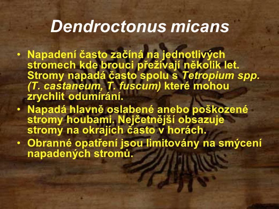 Dendroctonus micans