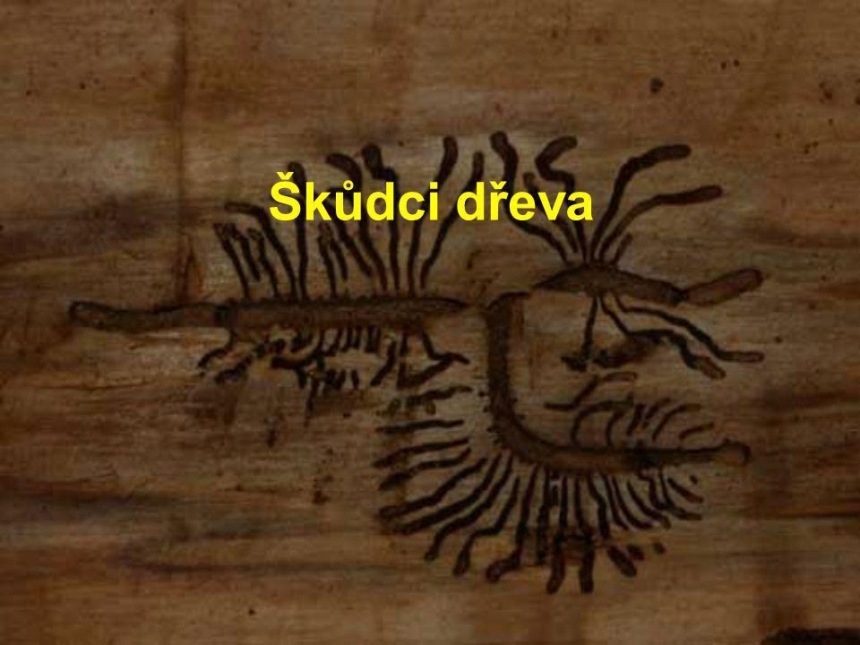 Škůdci dřeva