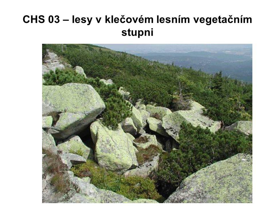 CHS 03 – lesy v klečovém lesním vegetačním stupni
