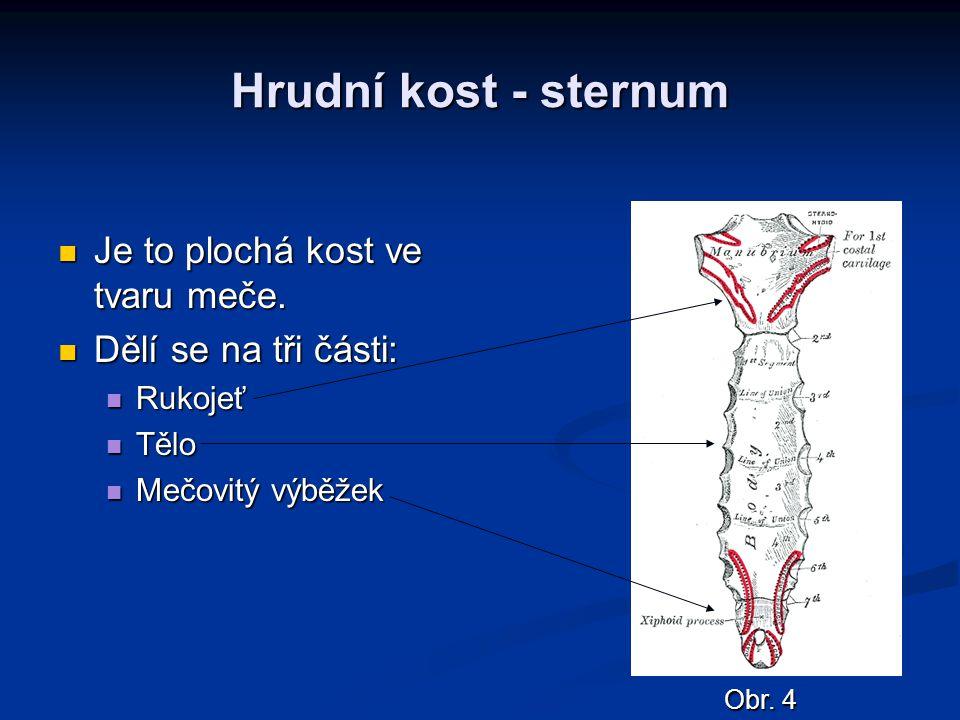 Hrudní kost - sternum Je to plochá kost ve tvaru meče.