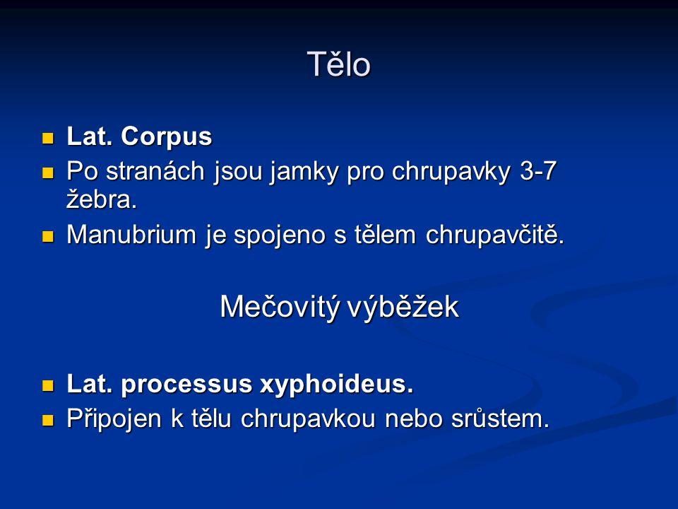 Tělo Mečovitý výběžek Lat. Corpus