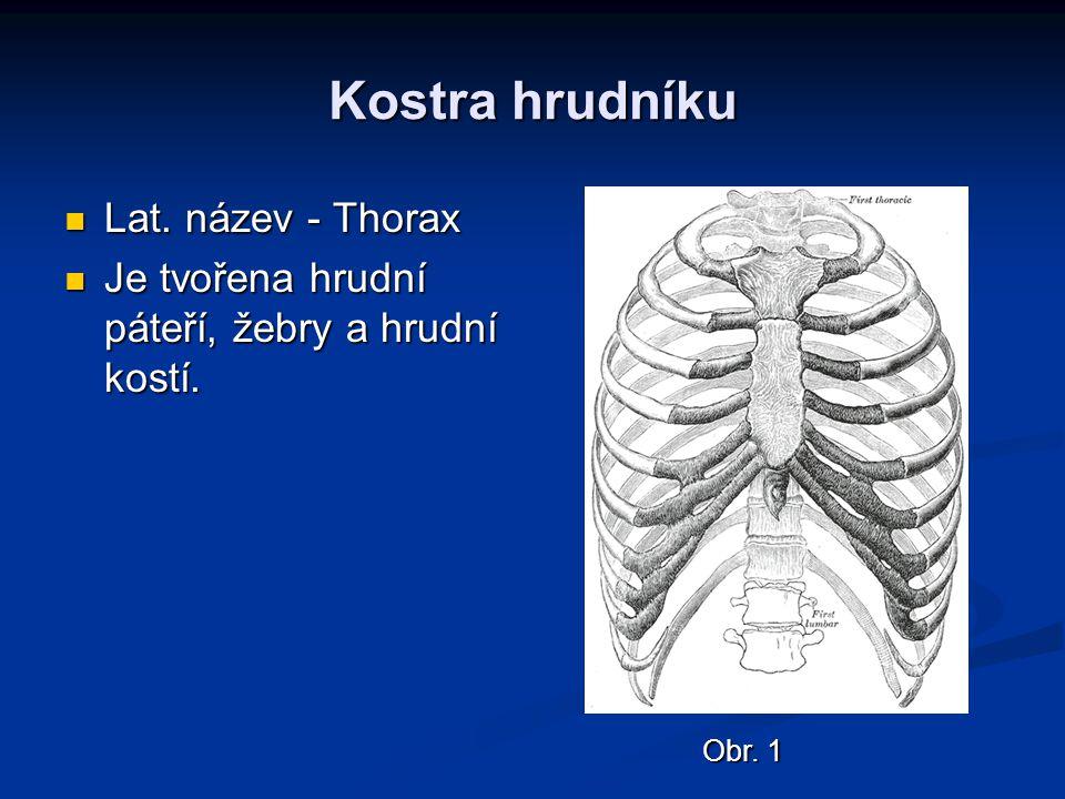 Kostra hrudníku Lat. název - Thorax
